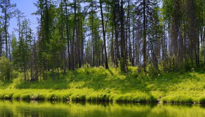 В России горят леса в Якутии