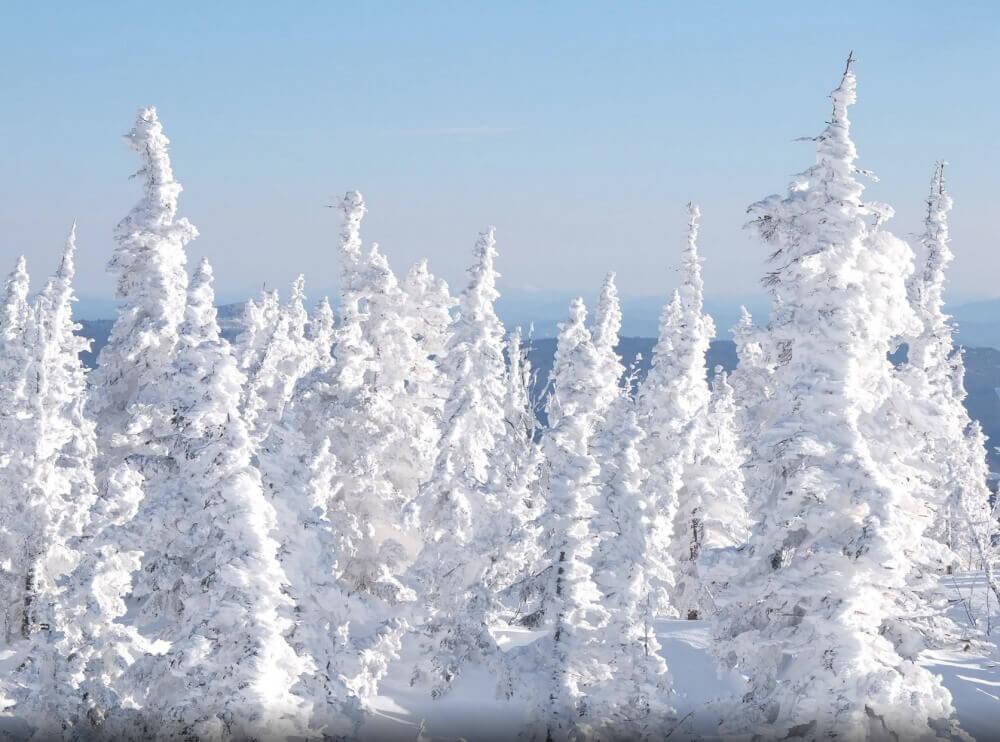 Лес вблизи поселка Шерегеш, Кемеровская область
