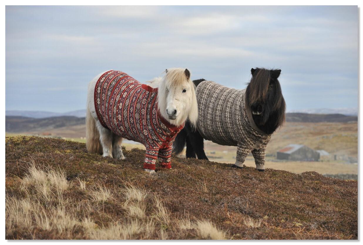 Знакомьтесь, Фивла (в красном свитере) и Витаминка (в коричневом) — две очаровательные шотландские пони.