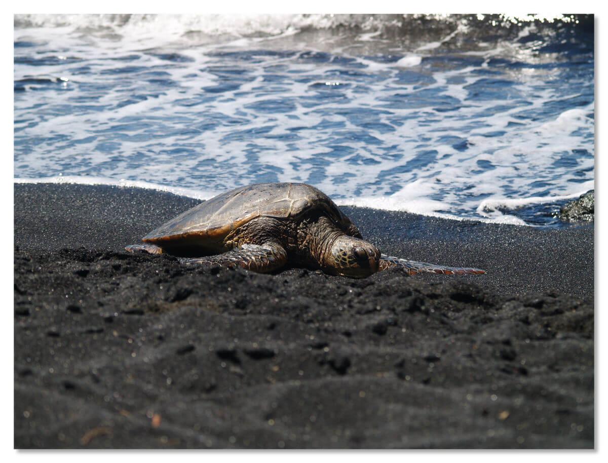 Черный пляж Пуналуу известен именно необычным цветом