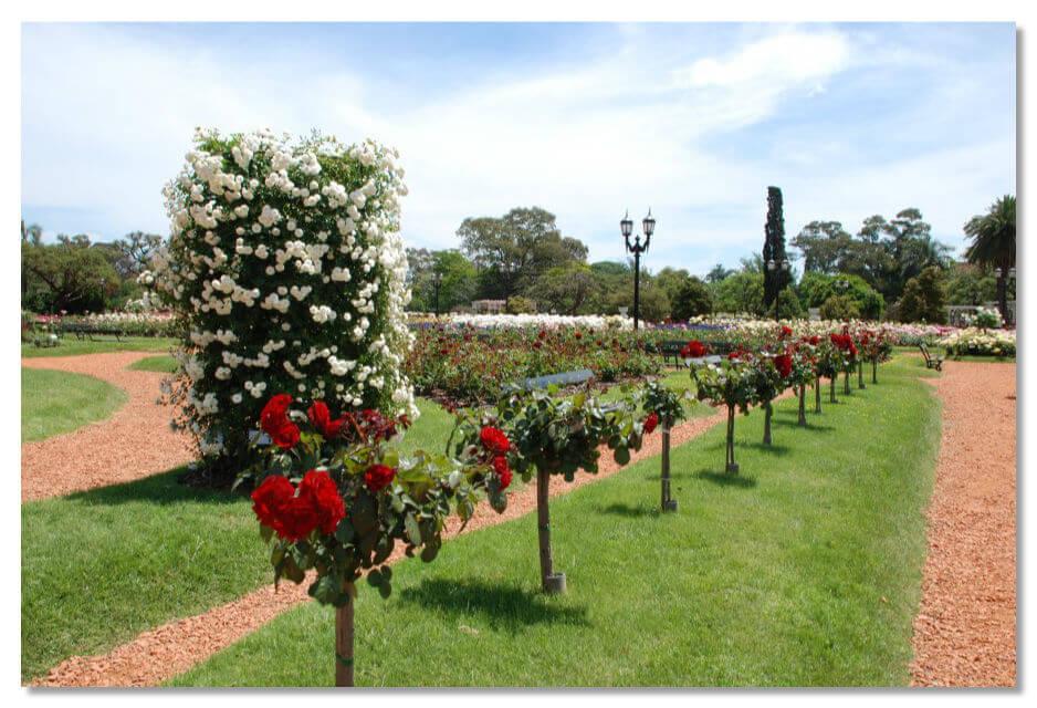 Парк Роз, или Parque del Rosedal находится в парковой зоне большого района Палермо