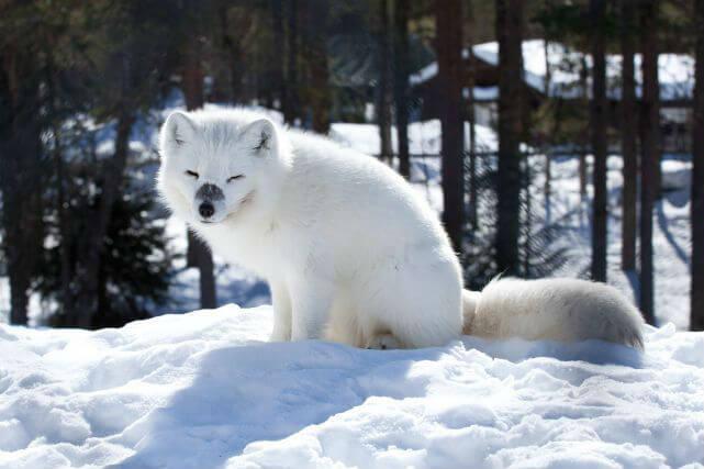 Арктический зоопарк Рануа