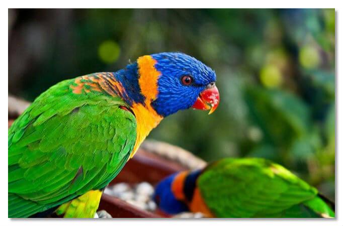 Лоро-парк - птичий городок