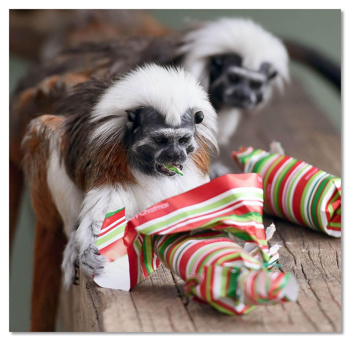 Рождество для жителей зоопарка в Австралии