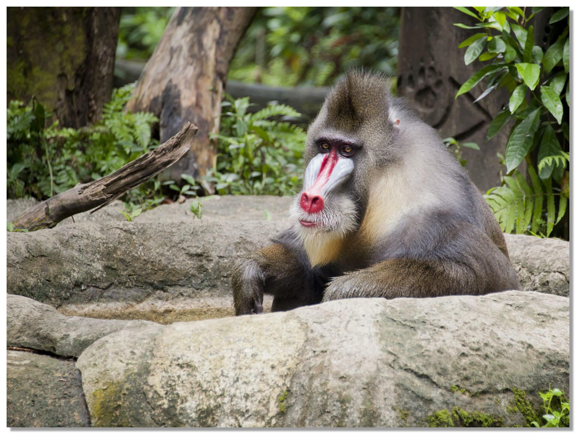 Сингапурский зоопарк. является самым большим на планете открытым зоопарком