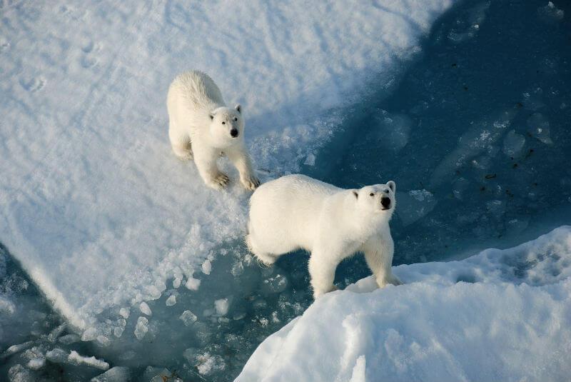 Путешествия в Арктику