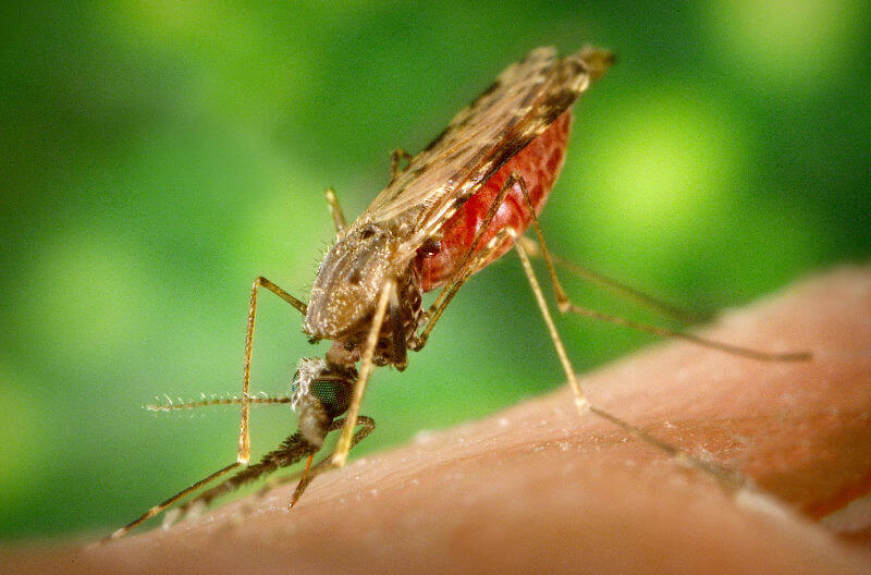 Малярия на Гоа