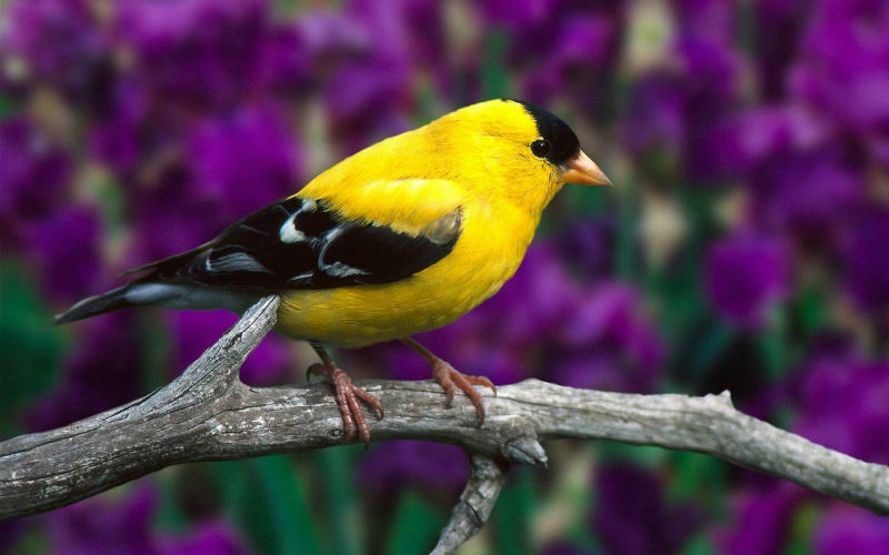 Птицы Воронежского зоопарка