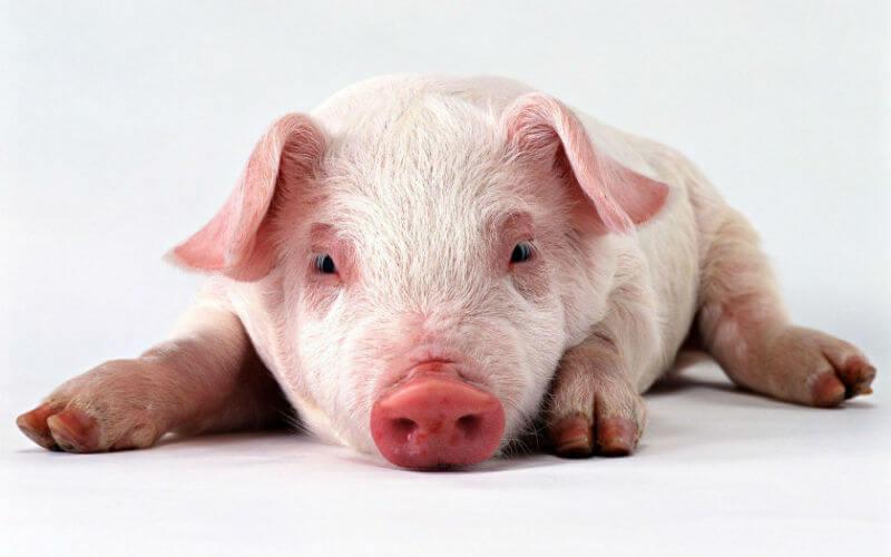 Опасность заболеть свинкой в США