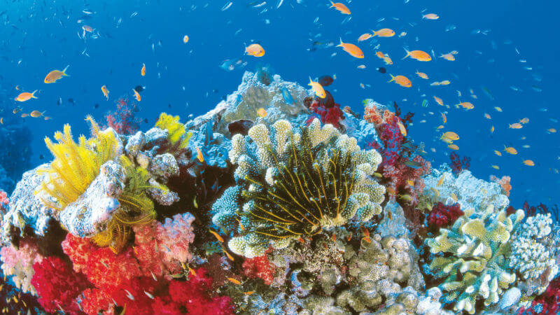 Рифы гибнут