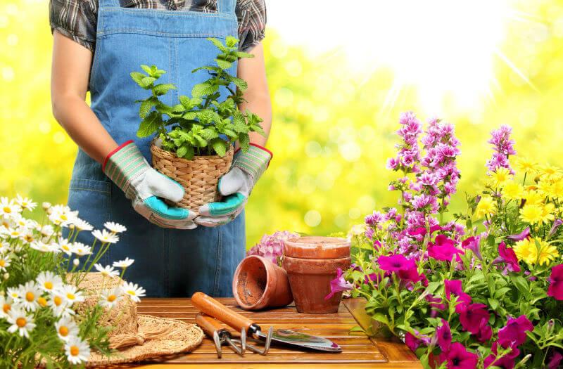 Выставка садоводов в Берлине