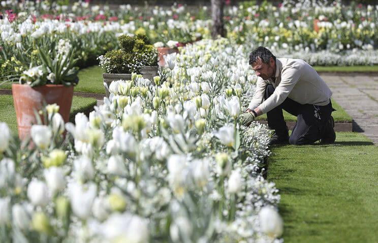 Принцесса Диана и Белый сад