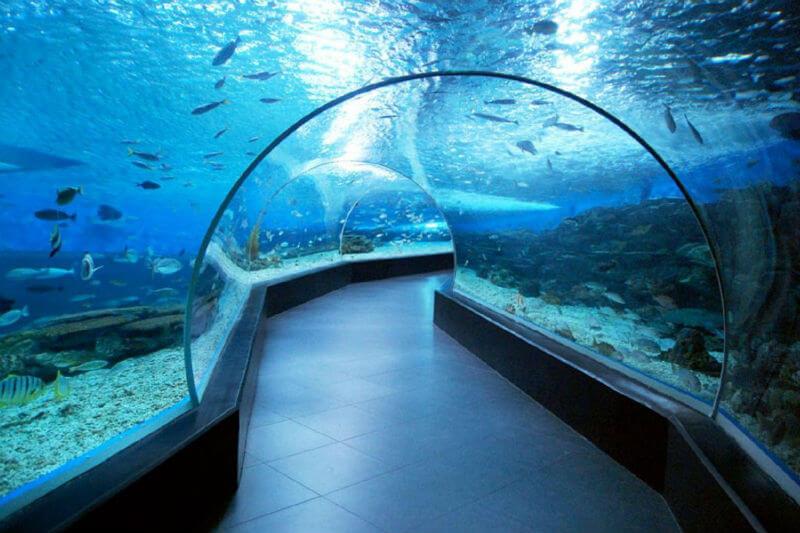 Теперь в Иерусалиме есть океанариум